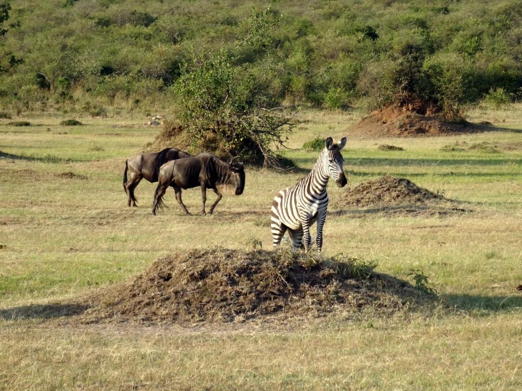 Maasai Mara, Kenya, August 2015